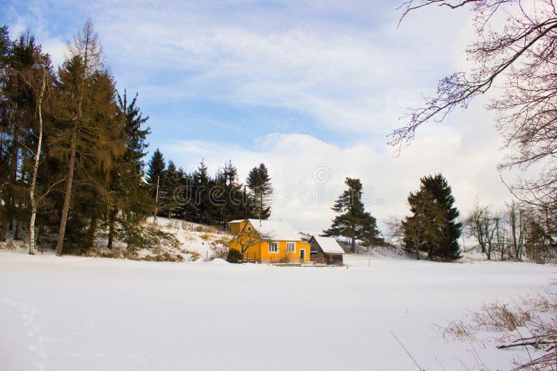 Paesaggio di inverno nella foresta immagine stock