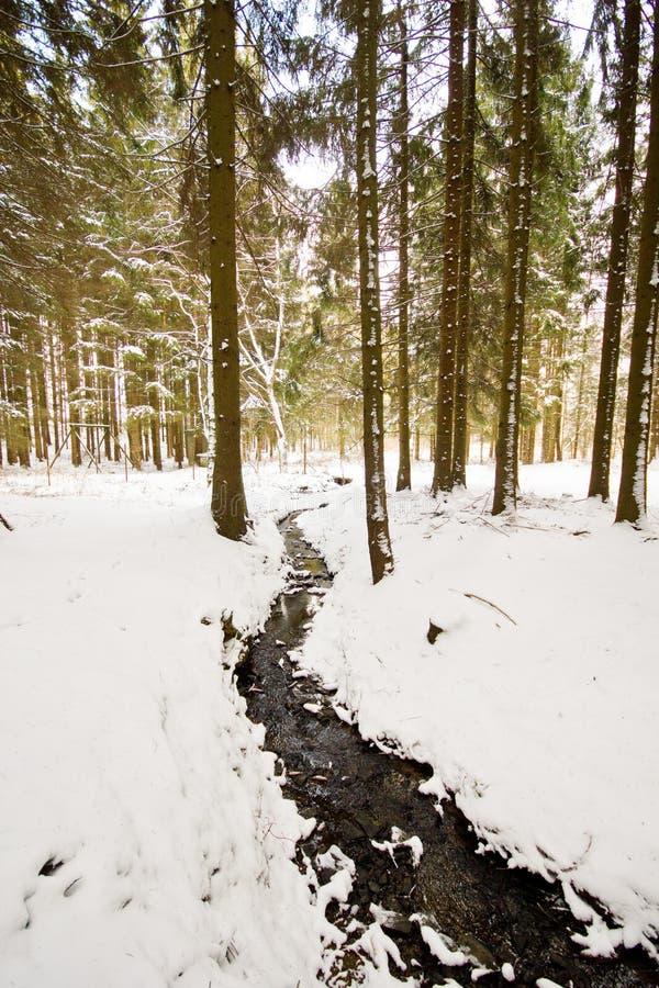 Paesaggio di inverno nella foresta con gli alberi coperti di bianco fotografia stock libera da diritti