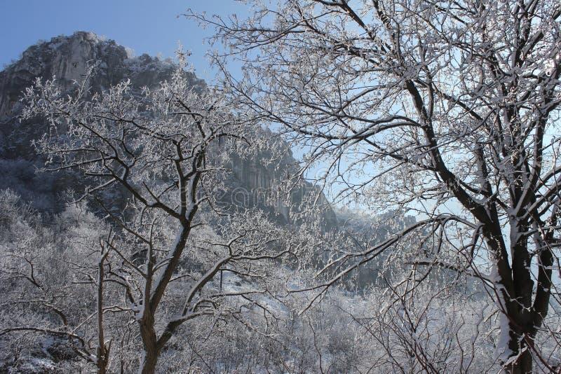 Paesaggio di inverno nella foresta e nel cielo fotografie stock