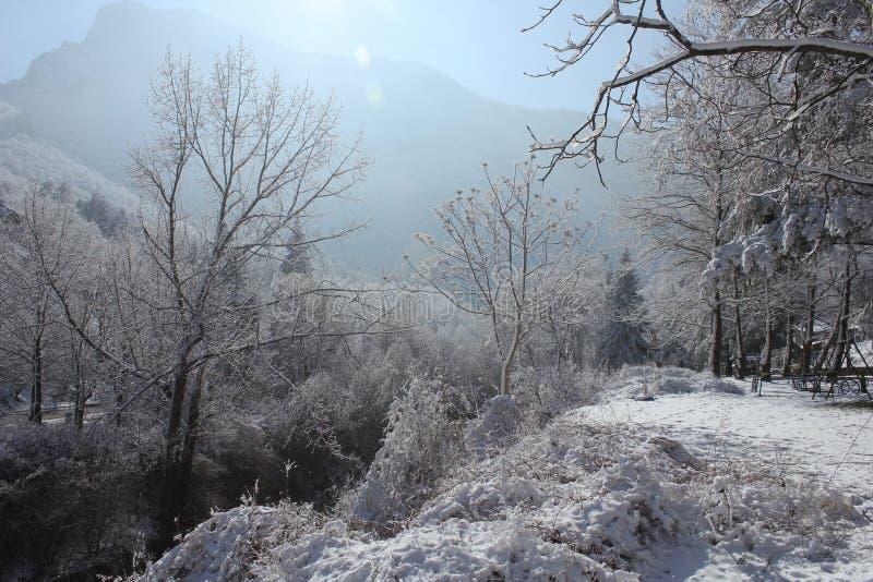 Paesaggio di inverno nella foresta e nel cielo fotografie stock libere da diritti