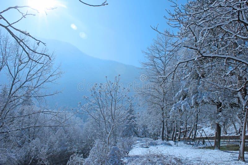 Paesaggio di inverno nella foresta e nel cielo fotografia stock