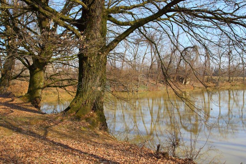 paesaggio di inverno di pace e di tranquillità immagini stock
