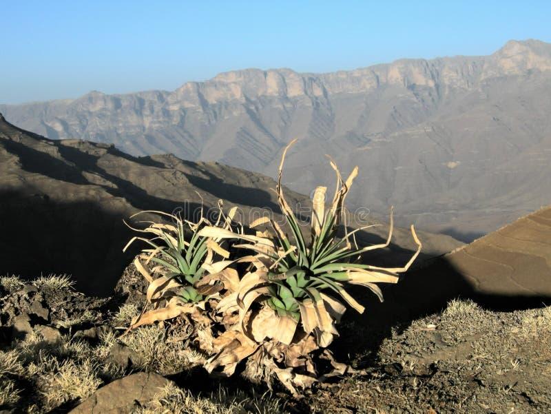Paesaggio di inverno in Siemen National Park, Etiopia fotografie stock libere da diritti