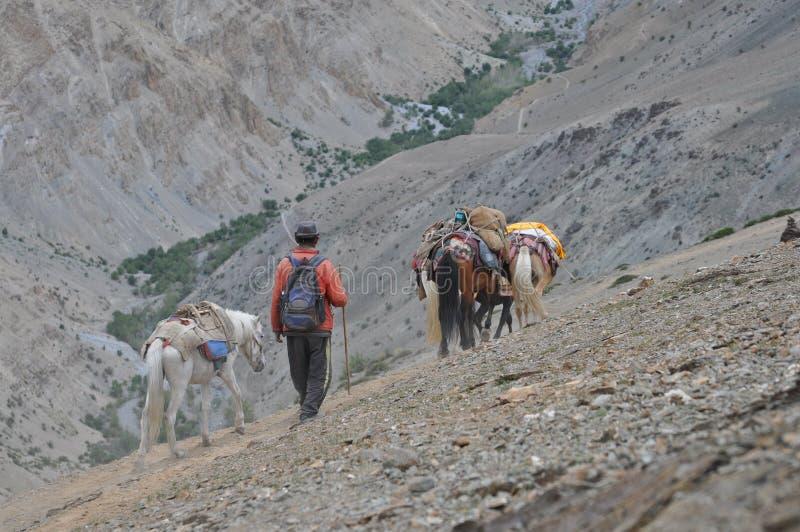Paesaggio di Ladakh - dell'India (poco Tibet) con il nomade immagini stock