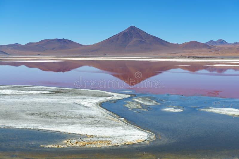 Paesaggio di Laguna Colorada nelle montagne delle Ande della Bolivia immagini stock libere da diritti