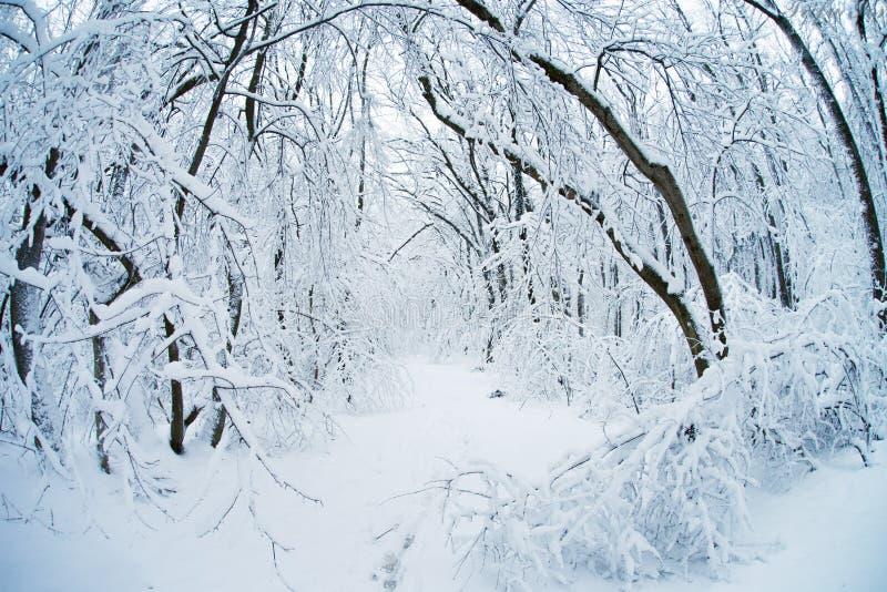 Paesaggio di legno di inverno immagini stock