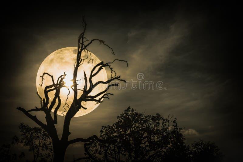 Paesaggio di notte del cielo con la luna eccellente luminosa dietro la siluetta fotografie stock libere da diritti