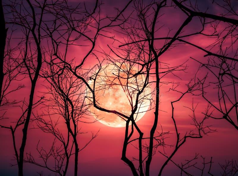 Paesaggio di notte del cielo con la luna eccellente luminosa dietro la siluetta fotografia stock