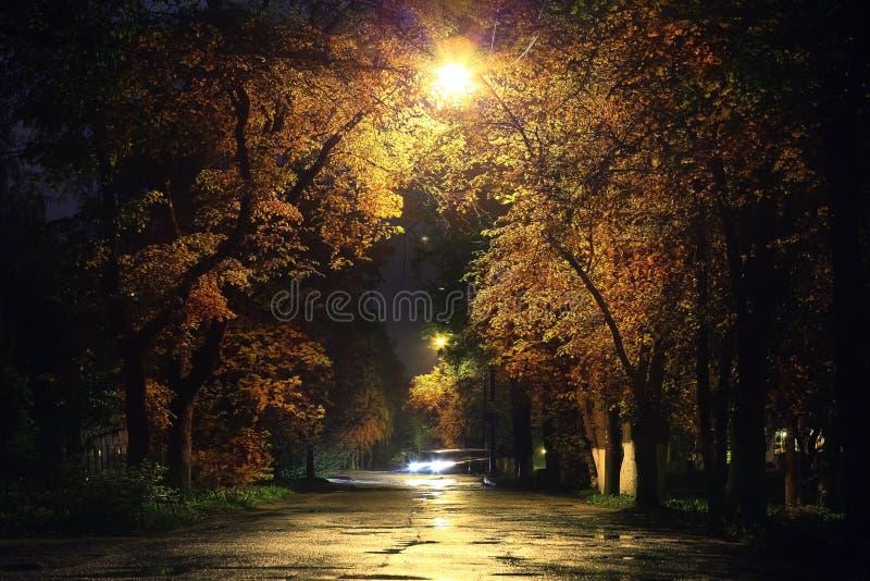 Paesaggio di notte nel parco con il vicolo degli alberi fotografia stock