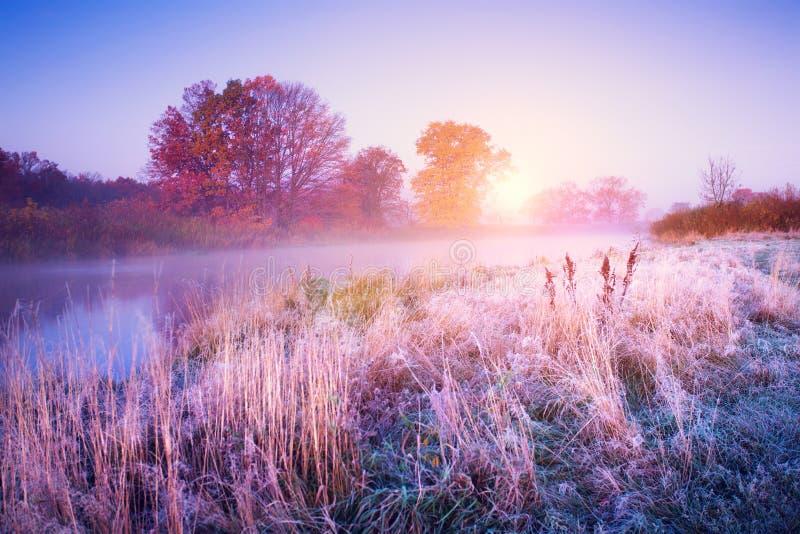 Paesaggio di novembre Mattina di autunno con gli alberi variopinti e brina sulla terra immagine stock libera da diritti