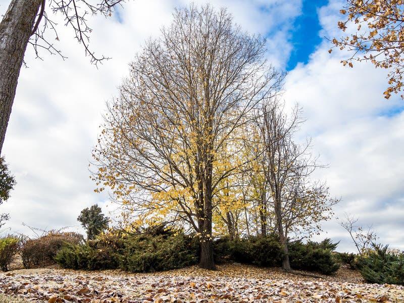Paesaggio di otoño di Arbol fotografie stock