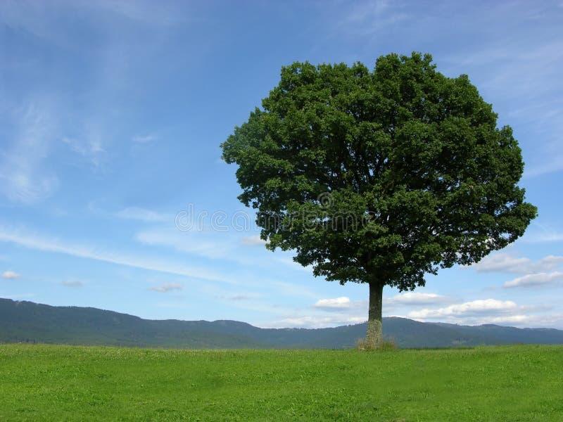 Paesaggio di paesaggio con l'albero solitario immagine stock