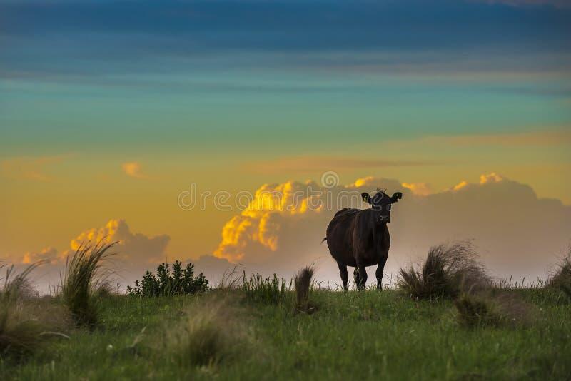 Paesaggio di Pampa, fotografia stock libera da diritti