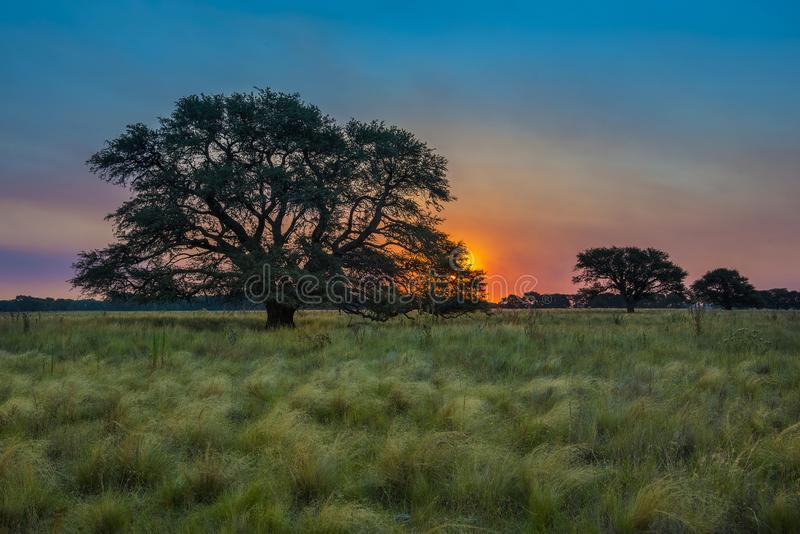Paesaggio di Pampa, Argentina immagini stock libere da diritti