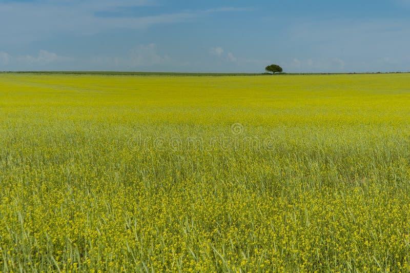 Paesaggio di Pampa, La Pampa, immagini stock libere da diritti