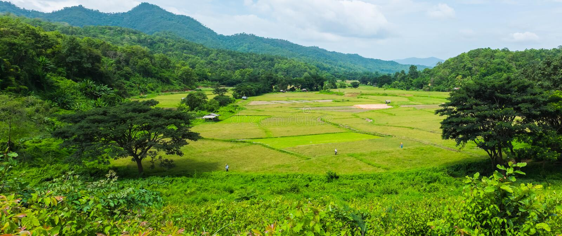 Paesaggio di panorama del campo verde dell'azienda agricola del riso con la montagna in tha fotografie stock libere da diritti