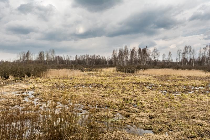 Paesaggio di regione paludosa con un albero nudo della foglia profilato su un cielo blu nuvoloso Erbe morte della palude, acqua c fotografia stock libera da diritti
