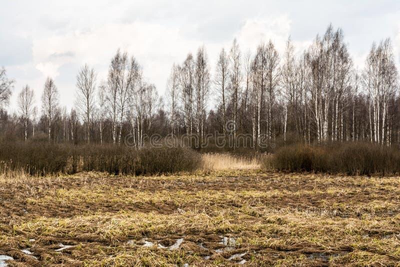Paesaggio di regione paludosa con un albero nudo della foglia profilato su un cielo blu nuvoloso Erbe morte della palude, acqua c immagini stock