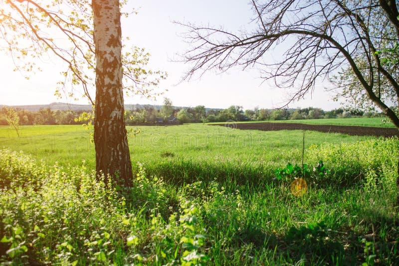 Paesaggio di sera della primavera sul campo nei raggi del sole di sera immagini stock libere da diritti