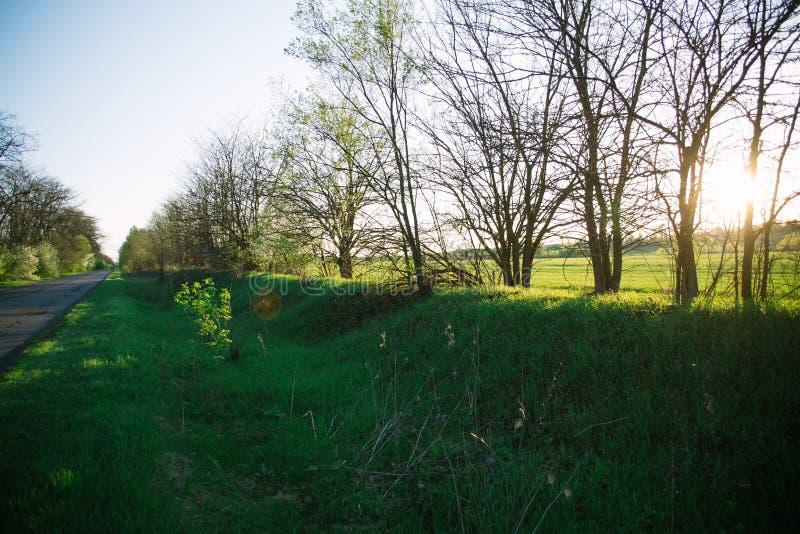 Paesaggio di sera della primavera sul campo nei raggi del sole di sera fotografie stock libere da diritti