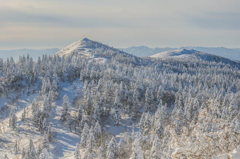 Paesaggio di Snowly fotografie stock libere da diritti