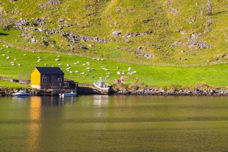 Paesaggio di Sognefjord, Norvegia, Scandinavia immagine stock libera da diritti