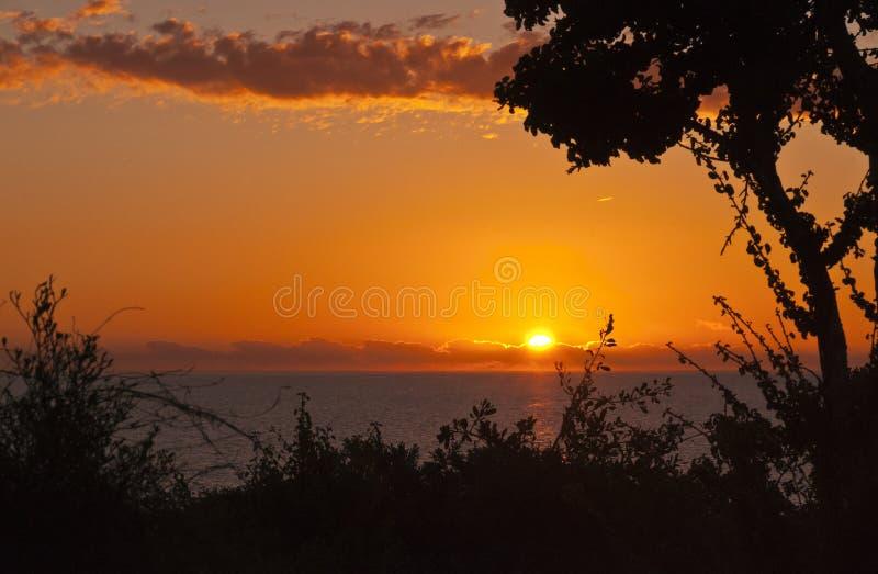 Paesaggio di tramonto con le siluette della pianta e dell'oceano fotografia stock libera da diritti
