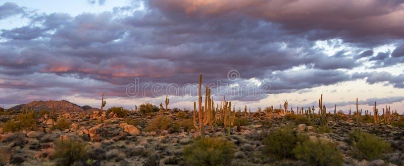 Paesaggio di tramonto del deserto con il cactus & le montagne fotografia stock