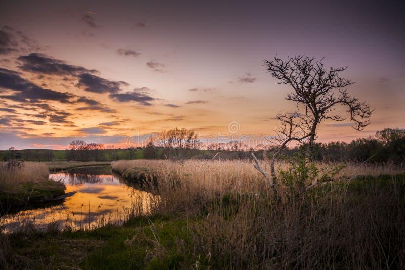 Paesaggio di una regione paludosa in Germania del Nord fotografia stock libera da diritti