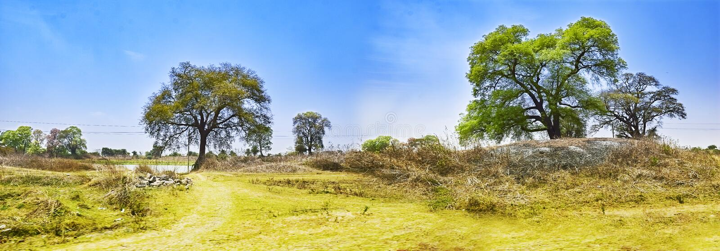 Paesaggio di una sponda del fiume Damodar L'India Asansol treeson il divieto fotografia stock libera da diritti