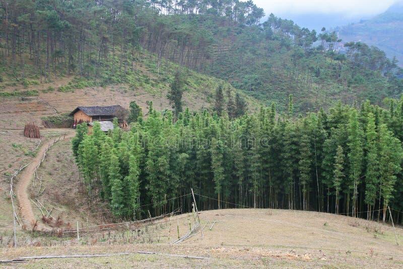 Paesaggio di vecchia casa accanto ad una collina di bambù fotografia stock