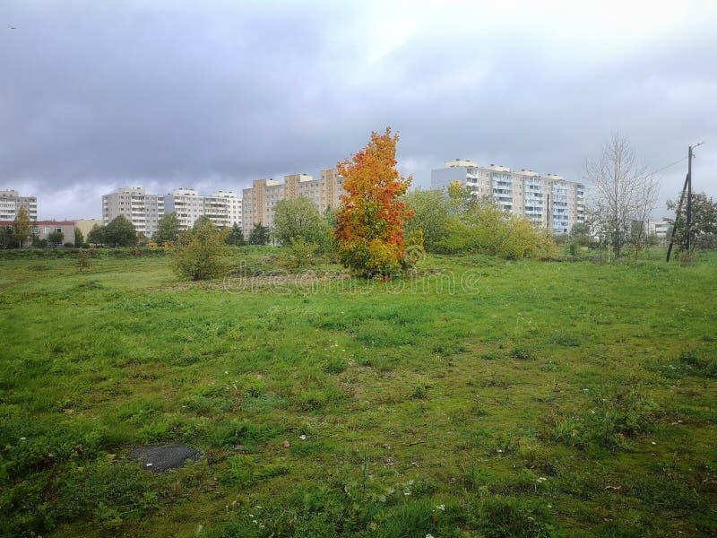 Paesaggio di verde di autunno immagine stock