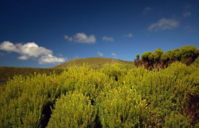 Paesaggio di verde del Flores, Azzorre, Portogallo fotografia stock libera da diritti