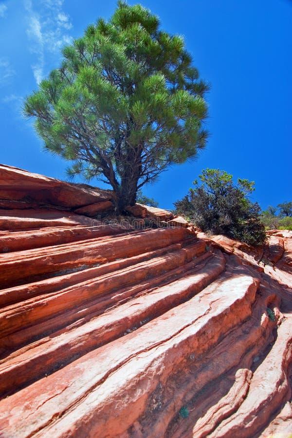 Paesaggio di Zion fotografie stock libere da diritti