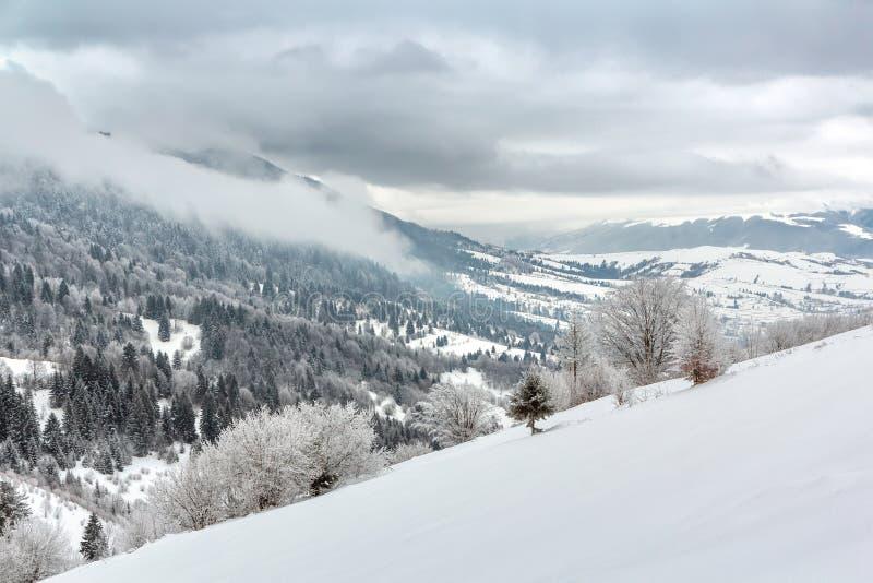 Paesaggio diagonale di inverno con gli alberi innevati fotografie stock libere da diritti