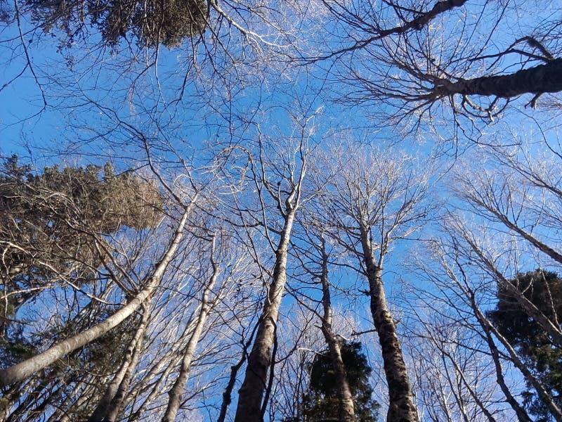 Paesaggio e blueness di caduta fotografia stock libera da diritti