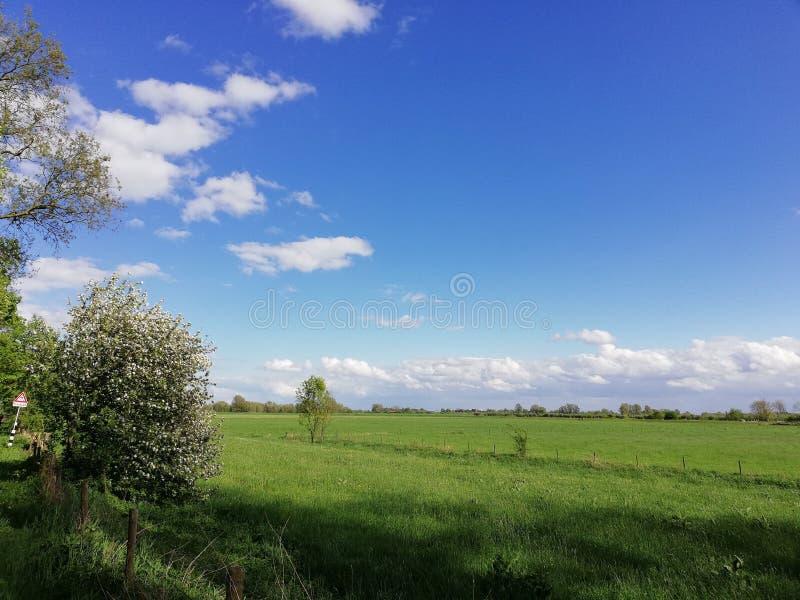 Paesaggio e cielo blu olandesi tipici del ploder dell'erba fotografia stock libera da diritti
