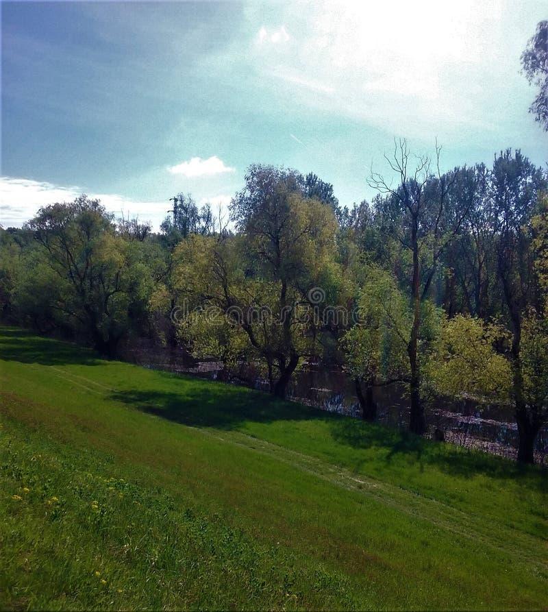 Paesaggio e foresta fotografia stock