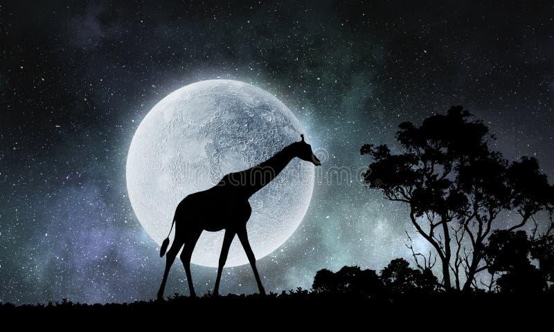 Paesaggio e giraffa naturali di safari Media misti immagine stock