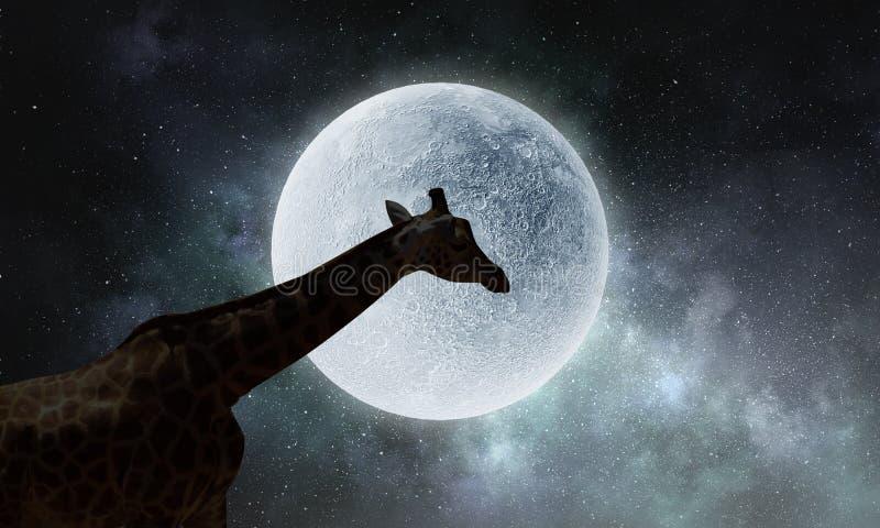 Paesaggio e giraffa naturali di safari Media misti fotografia stock