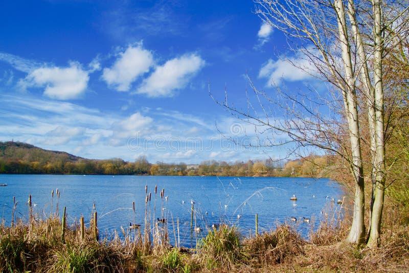 Paesaggio ed il lago immagini stock libere da diritti