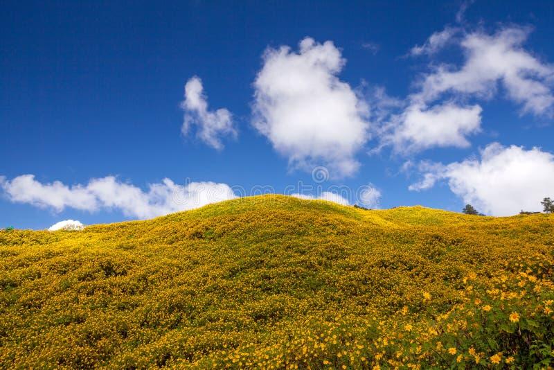 Paesaggio, erbaccia del girasole messicano (tithonia diversifolia) immagine stock libera da diritti