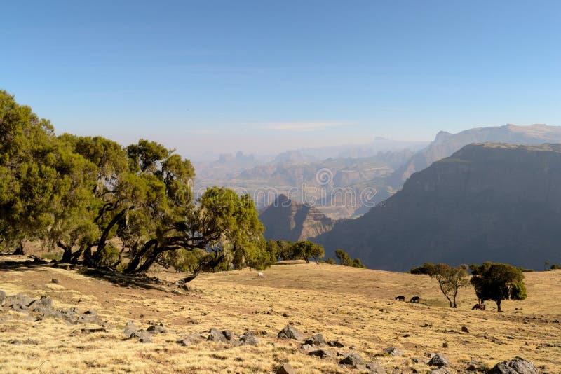 Paesaggio etiopico dorato fotografia stock libera da diritti