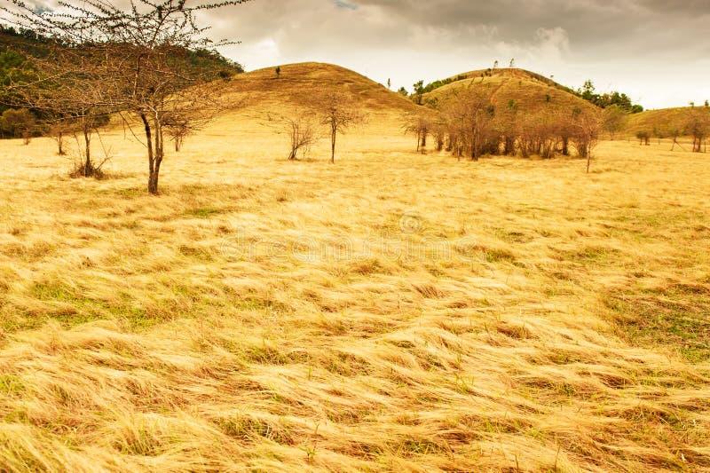 Paesaggio fantastico delle montagne dorate dell'erba e del pascolo su crepuscolo di estate fotografia stock