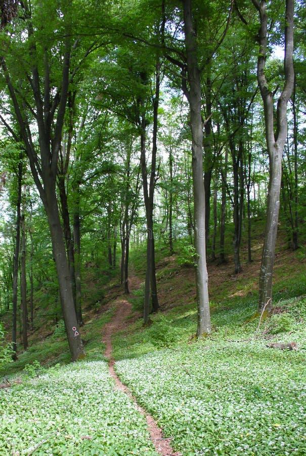 Download Paesaggio in foresta fotografia stock. Immagine di alba - 30830628