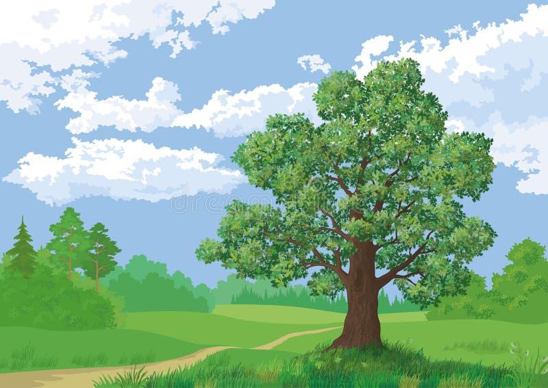 Paesaggio, foresta di estate e quercia royalty illustrazione gratis