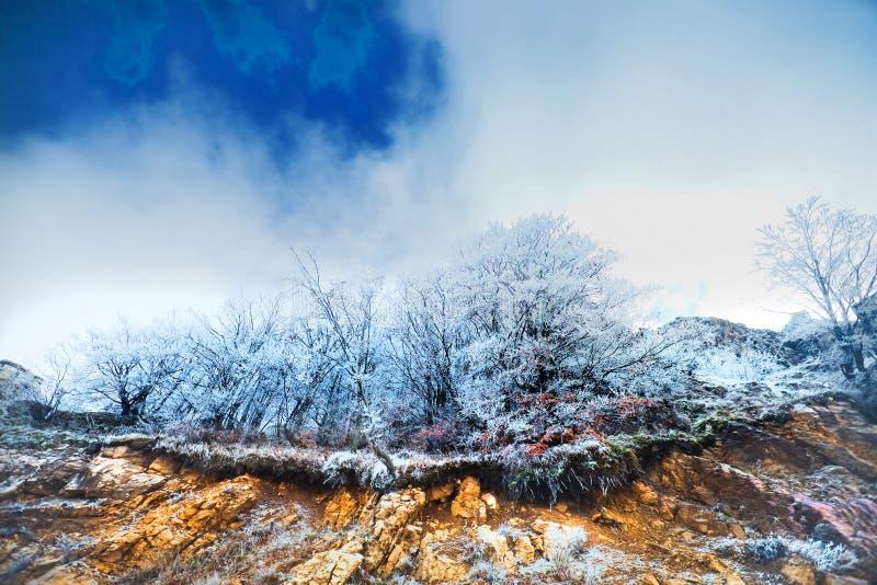 paesaggio freddo immagine stock