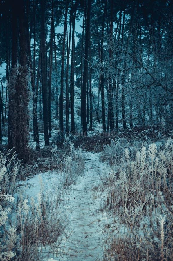 Paesaggio freddo della foresta fotografia stock