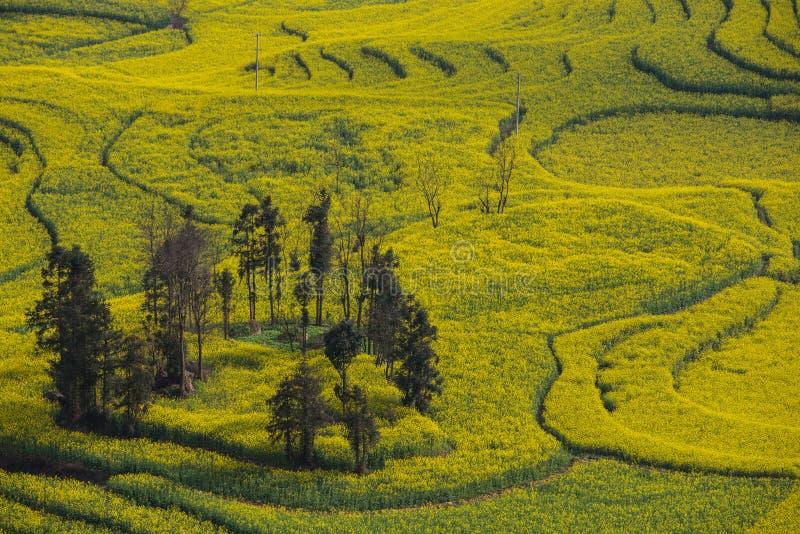 Paesaggio fresco della primavera dei campi variopinti fotografia stock libera da diritti