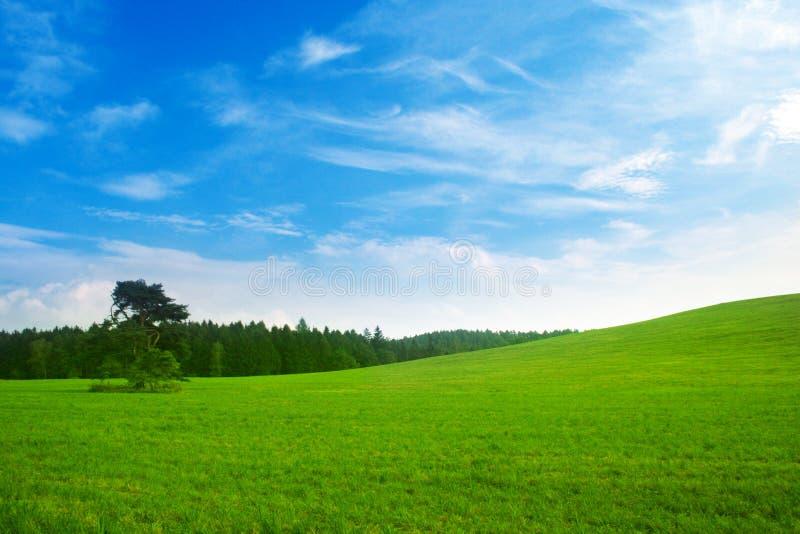 Paesaggio fresco di estate fotografie stock